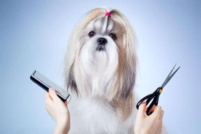 τρίχες συμβουλές Σκύλος Tips