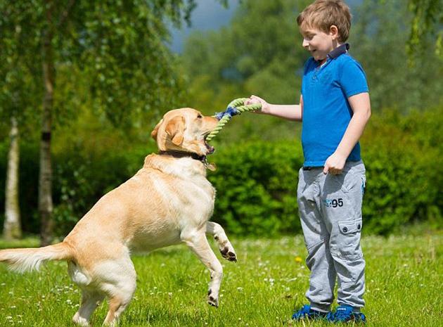 Τα Σκυλιά Ιστοχώρος Γνωριμιών