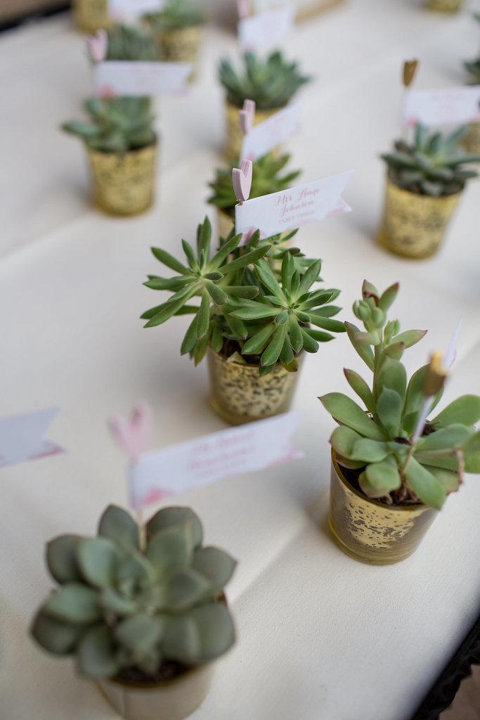 Succulents 748a2