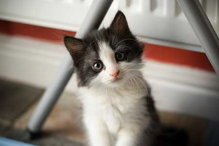 cute-cats-pictures-1